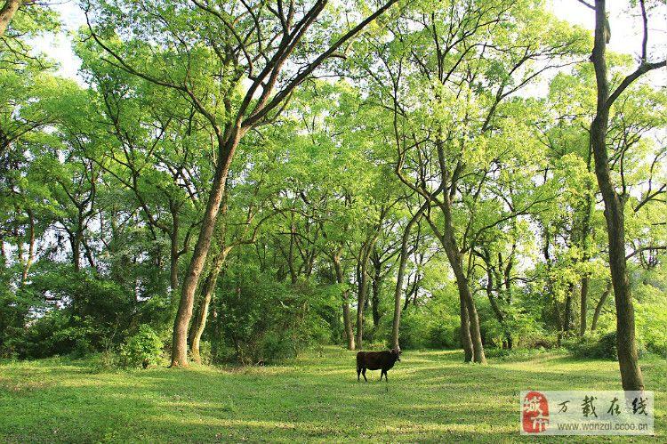 远处背景树林素材