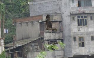 寻找巫水河畔(黄桑路)的那只鹰