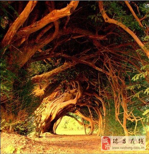 恍如隔世:八个最美的树隧道