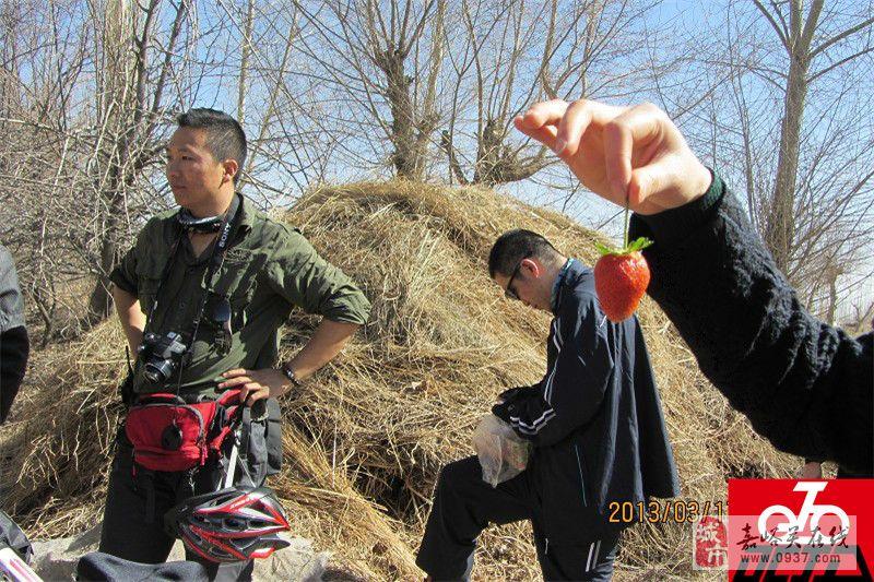 【活动掠影】2013年3月17日文殊摘草莓剪影