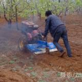 [原创]谷雨过后农事忙