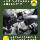 [公告][贴图]老鼠钻进发动机舱隐患大 咬线路或致车起火