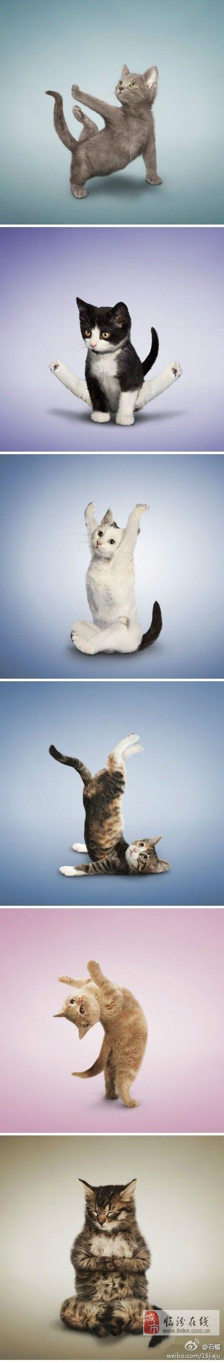 来,大家一起来练瑜伽!