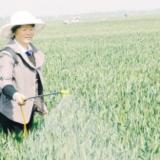 舒庄乡村民对麦田进行一喷三防