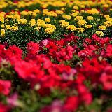 人民公园――――-花