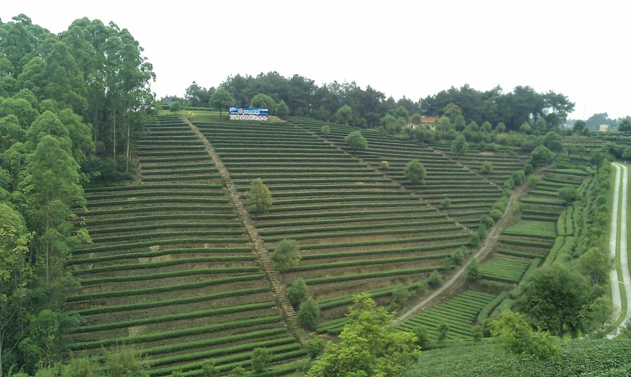 壁纸 成片种植 风景 植物 种植基地 桌面 1280_766