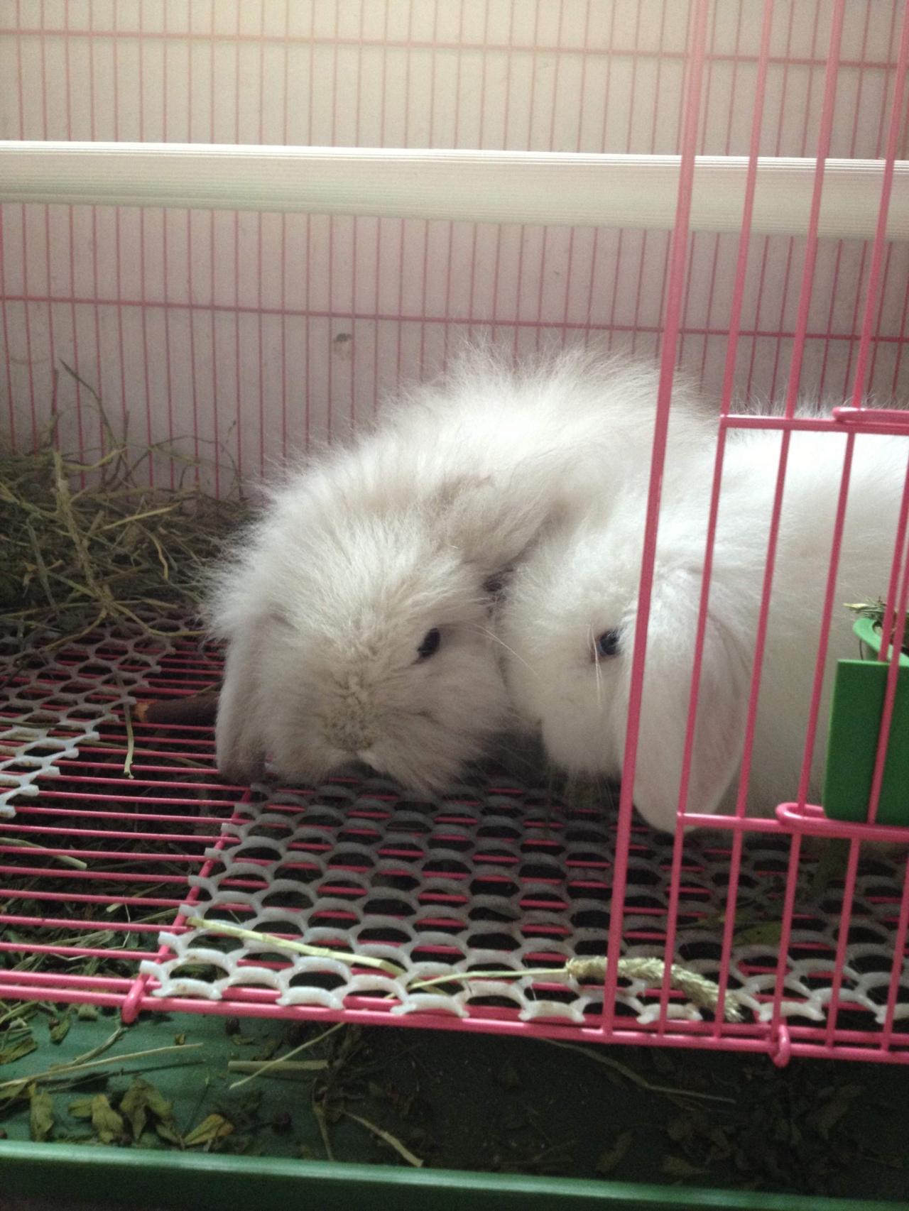 一对可爱的兔子图片