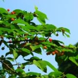 [原创]樱桃沟