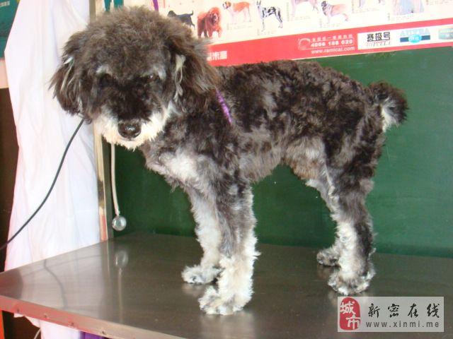 [原创]龙8国际祥和宠物医院现有只狗狗找爱狗者求邻养,同时寻找狗狗主人。