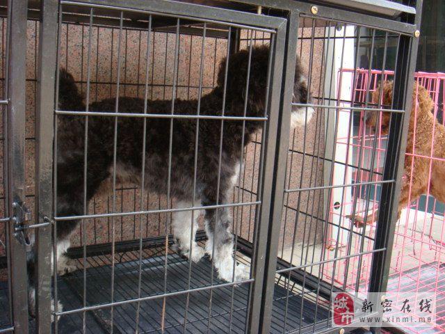 [原创]威尼斯人平台祥和宠物医院现有只狗狗找爱狗者求邻养,同时寻找狗狗主人。
