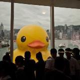 世界上最大的橡皮鸭在维多利亚港亮相