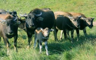 游黄桑自然保护区最高峰牛坡头
