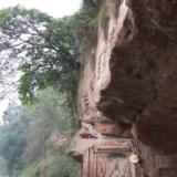 顽强 生命 榕树 悬崖 夹江千佛岩 ——/顽强的生命——夹江千佛岩的悬崖榕树