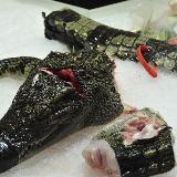 [原创]鳄鱼肉鲜美 霍邱什么时候开卖呢?