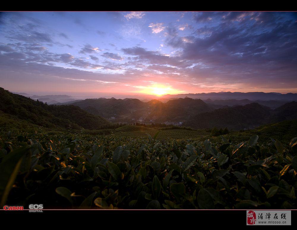 传二张今日茶山早晨,昨天几个去云贵山的有佳作,该交作业了。。。