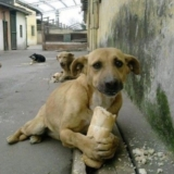 如何拯救流浪狗,丰南有没有流浪狗犬社