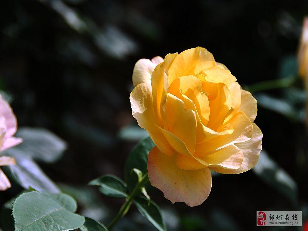 [原创]多彩玫瑰花_摄影拍客