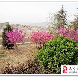 [原创]绿化带前欣赏秦安滨河路风景