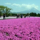 [贴图】樱花-竟然如此美丽
