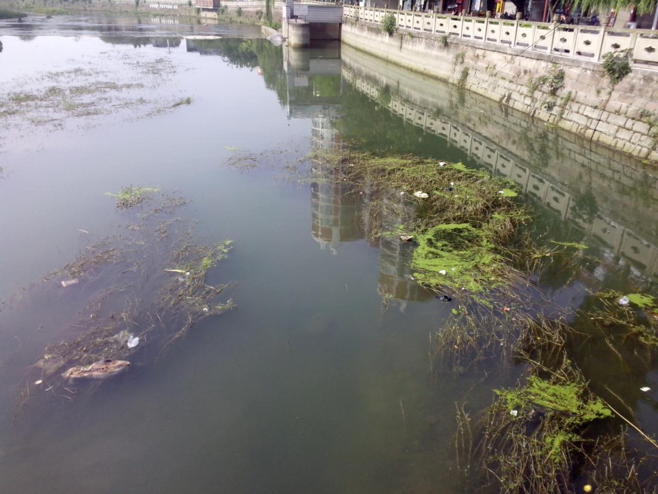 [建�h]�d竹城里面的河水很�K,希望有�P人�T能清理