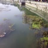 [建议]绵竹城里面的河水很脏,希望有关人员能清理