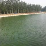 河北高碑店新城张奔营永轩生态园百亩鱼塘将于六月八号正式开业