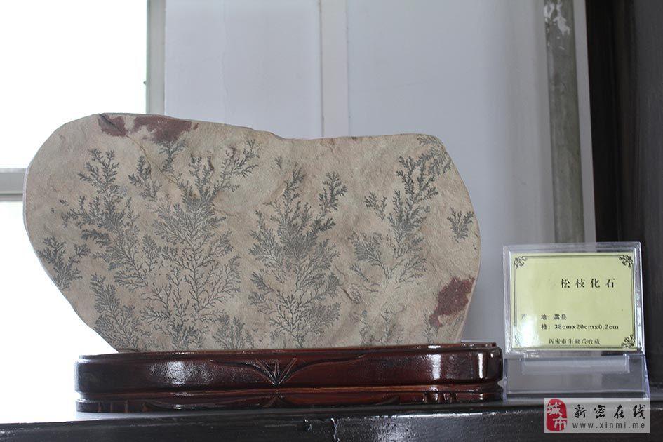 威尼斯人平台国土资源局伏義山奇石展[松枝化石]