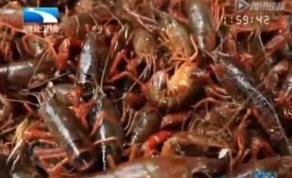 [转贴]小龙虾生长环境如何?
