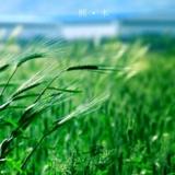 熙木作品集-静物