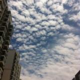 今天海安的天好�{,�]有秸�焚��的天空真美