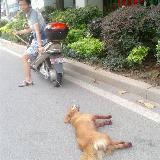 福建男子将小狗绑车后拖拽致死
