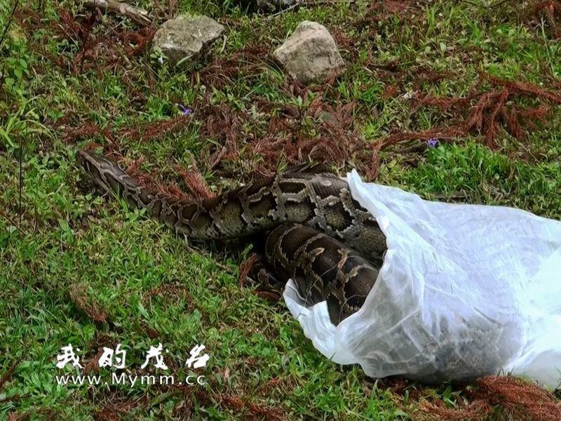 属国家一级重点保护野生动物