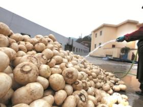 我县大力发展农民专业合作社