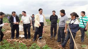曲靖市副市长朱兴友到陆良县调研农业生产