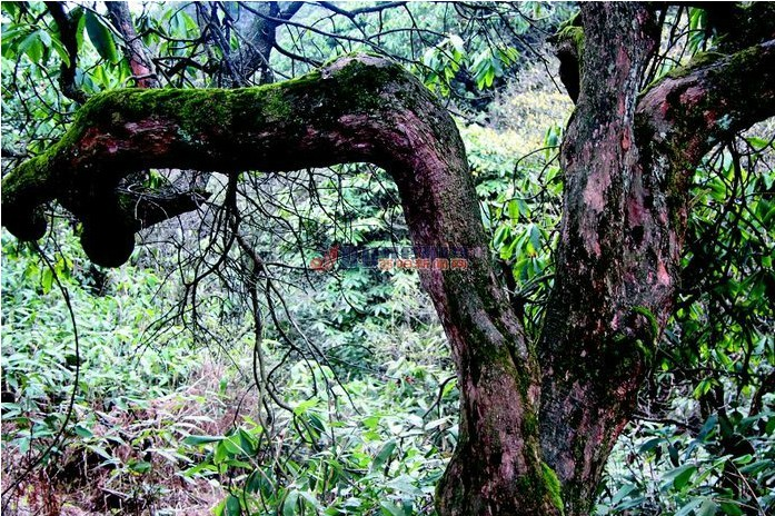 木叶乡还有木叶河自然风光,原始的小咸土家山寨,古墓古碑古树古桥
