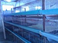 养殖业鸡笼子