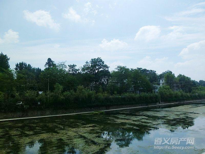 桃溪左岸对面:河边、丛林