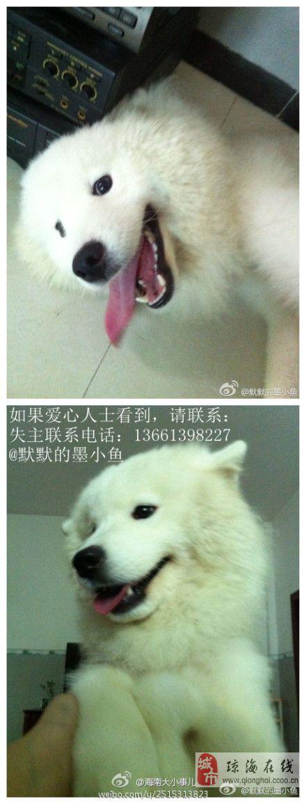 【微启事】紧急寻狗