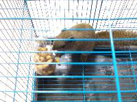 出售一只小松鼠
