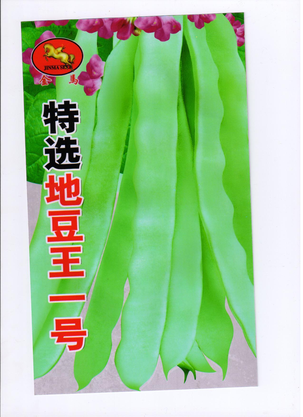 豆角种子茴香种子金马牌优质高产