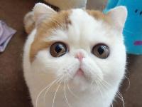 可愛加菲貓可愛的你!