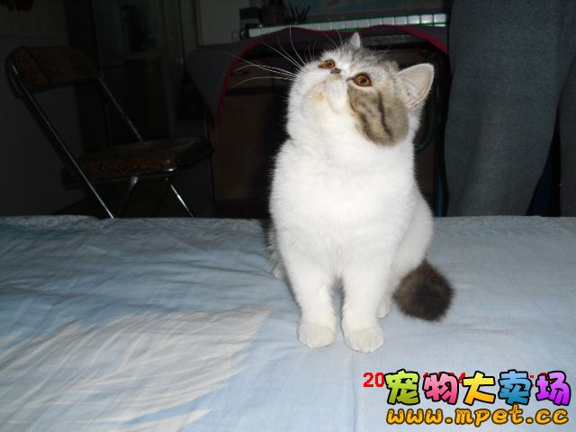 可爱加菲猫可爱的你!