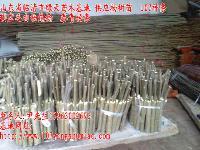 杨树苗 107种条 毛白杨炮捻