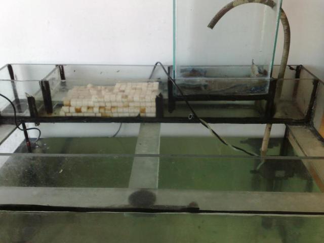 自制上滤鱼缸,过滤效果极佳