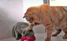 教您如何挑选猫猫?