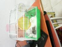 仓鼠一对带笼子