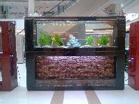 生态鱼缸常年面换水