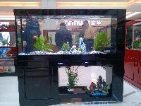 生態魚缸常年面換水
