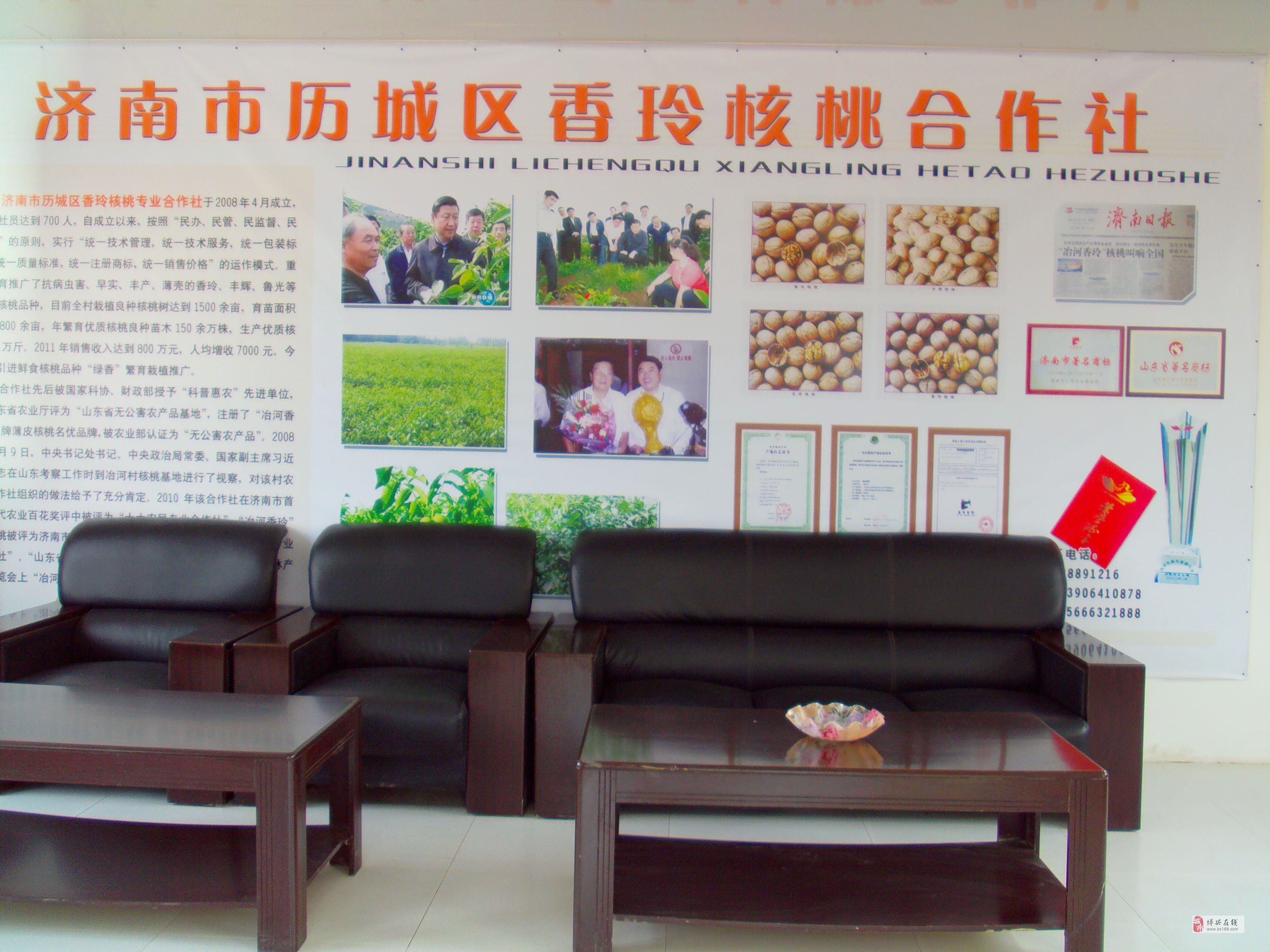 山東濟南常年出售香玲核桃苗   核桃樹   核桃