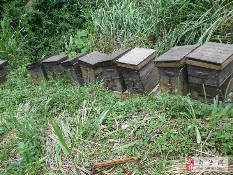 長沙養蜂技術咨詢,培訓
